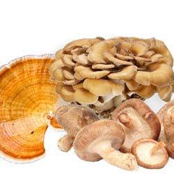 Shiitake, Reishi et Maitake, des champignons bons pour la santé