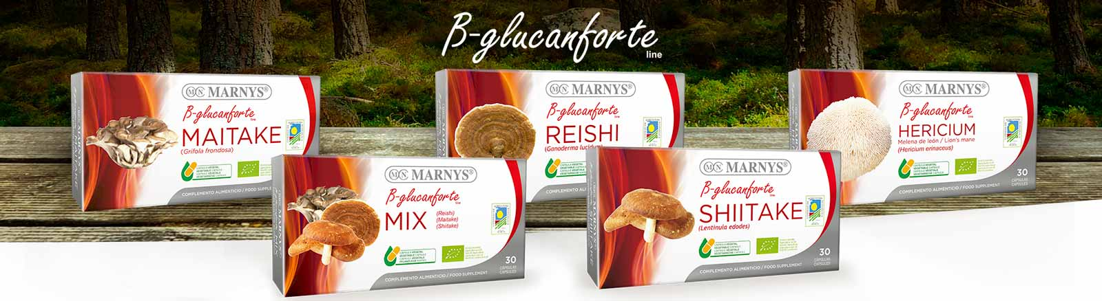 TRADITION, PURITY AND WELL-BEING. DISCOVER OUR SELECTION OF MUSHROOMS