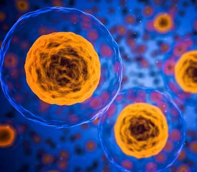 celulas radicales