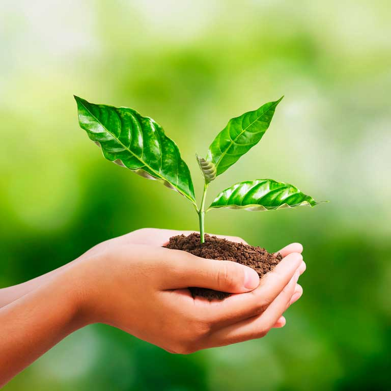 How to be more ecological: tips and eco-friendly products
