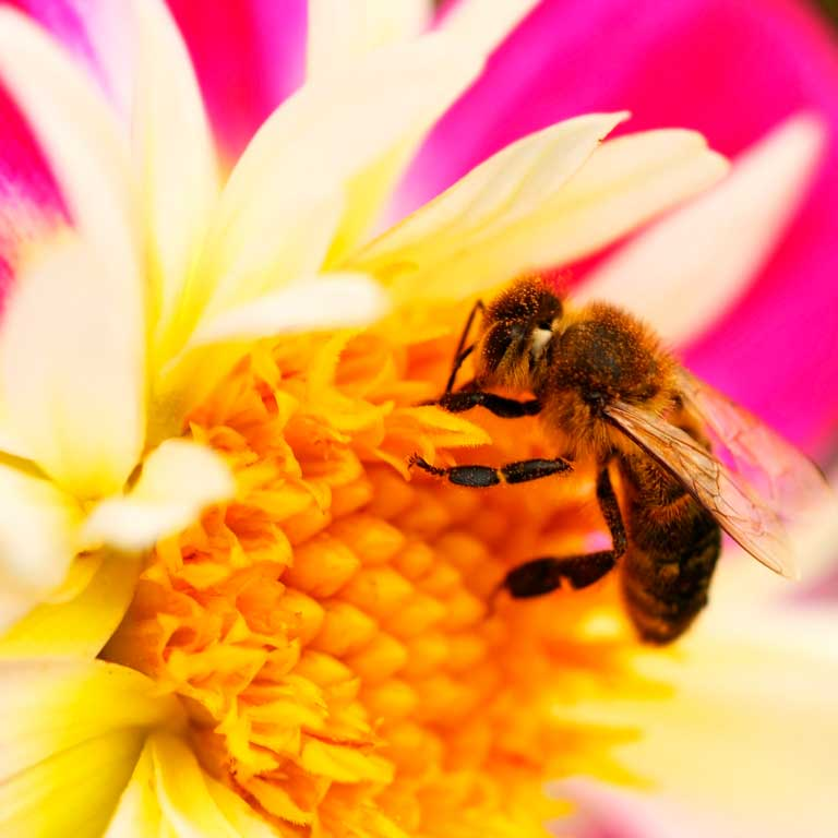 Bee Pollen. Properties and how to take pollen